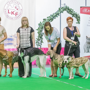 "Dog Fashion Show on the International Dog Show ""Latvian Winner 2017"""