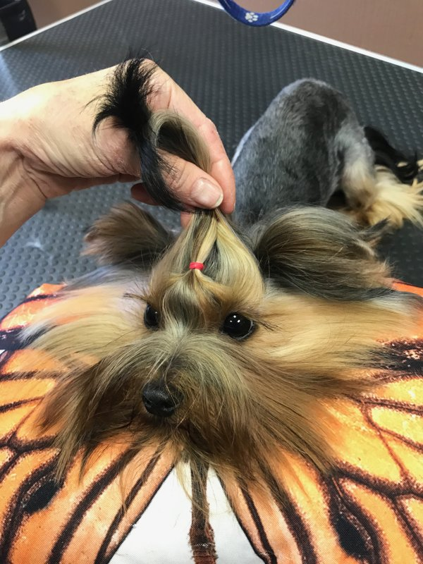 Grooming salon for dogs