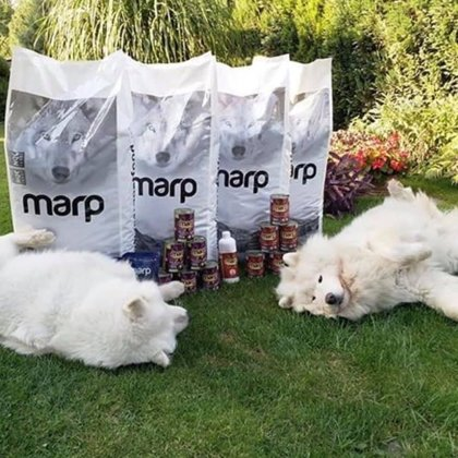 Marp sausā barības suņiem un konservi