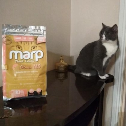 Marp Think Holistic Salmon CATS