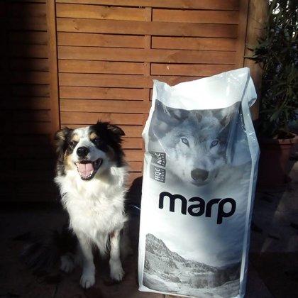 Marp sausā barības suņiem