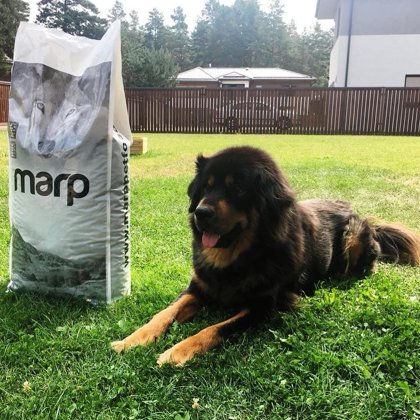 Marp Think Holistic Chicken Dog Food