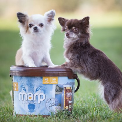 Marp Holistic Dog Food