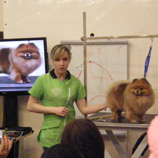 Anna Bardysheva - Pomeranian Grooming
