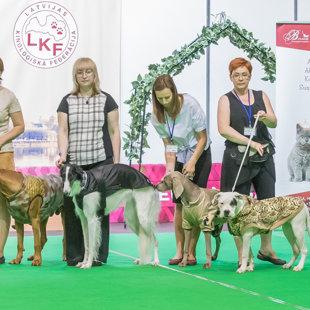 "Dog Fashion Show on the International Dog Show ""Latvian Winner 2017"""