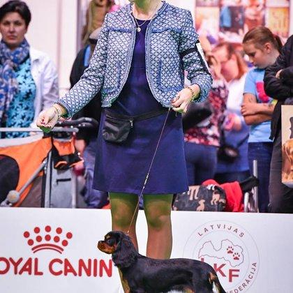 Cavalier King Charles Spaniel - Wolmar Star Jane Fonda - Owner Zanna Romanenko