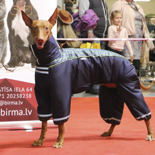 Dog Fashion Show. Designer Natalia Tochenaya - Pet Expo 2016 - 19-20.03.2016