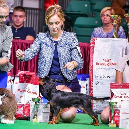 Наши собаки на выставках