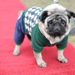 Fleshmops - Dog Fashion Show - 02.05.2015