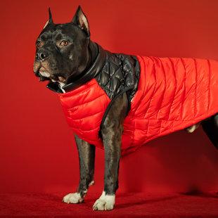 Modes apģērbi suņiem no Birma PETS